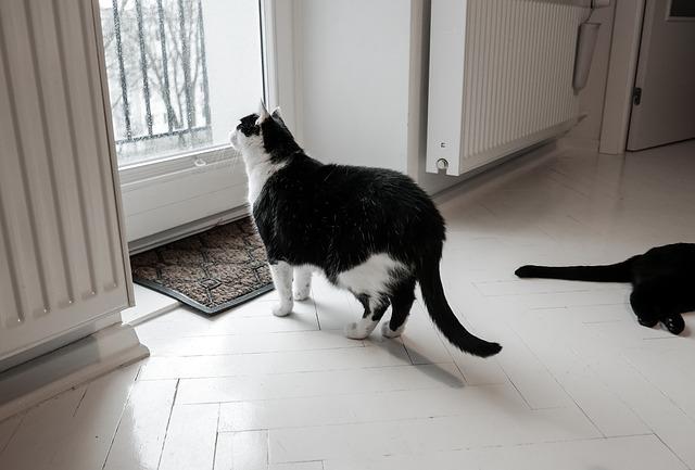 Umziehen mit Katze